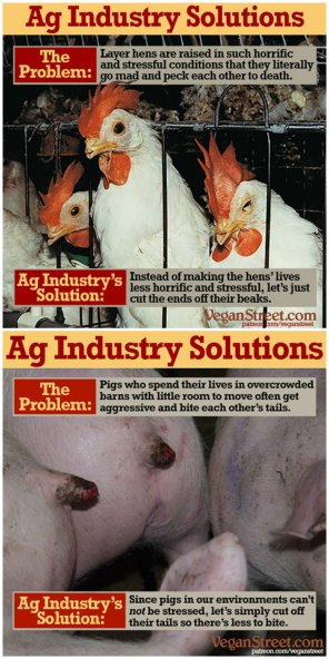 meat industry solutions
